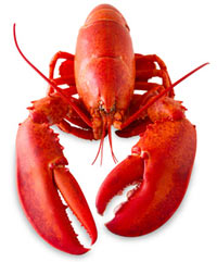 A Lobster image