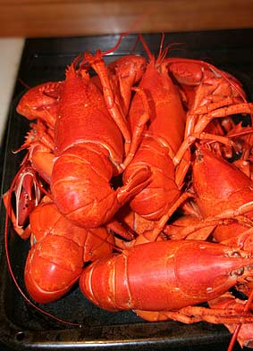 Boiled Lobsters from the Lobster Trap in East Rochester, NY