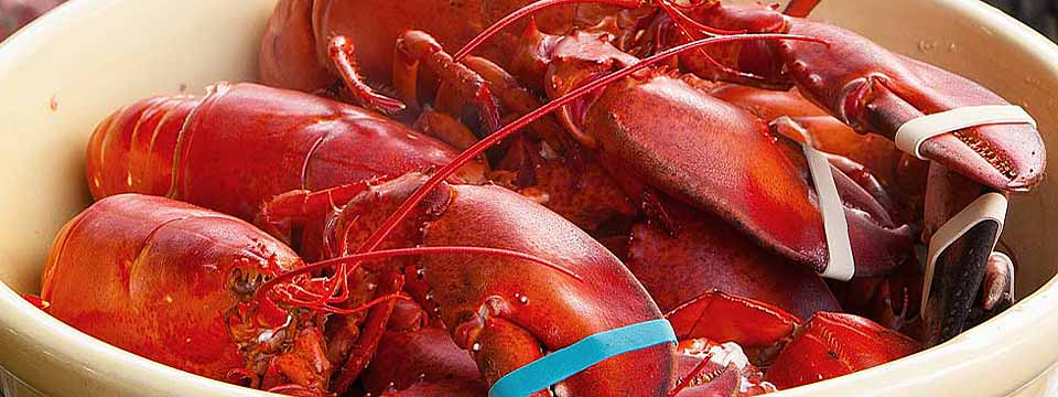 LobsterTrap_LobstersInBowl_960x350